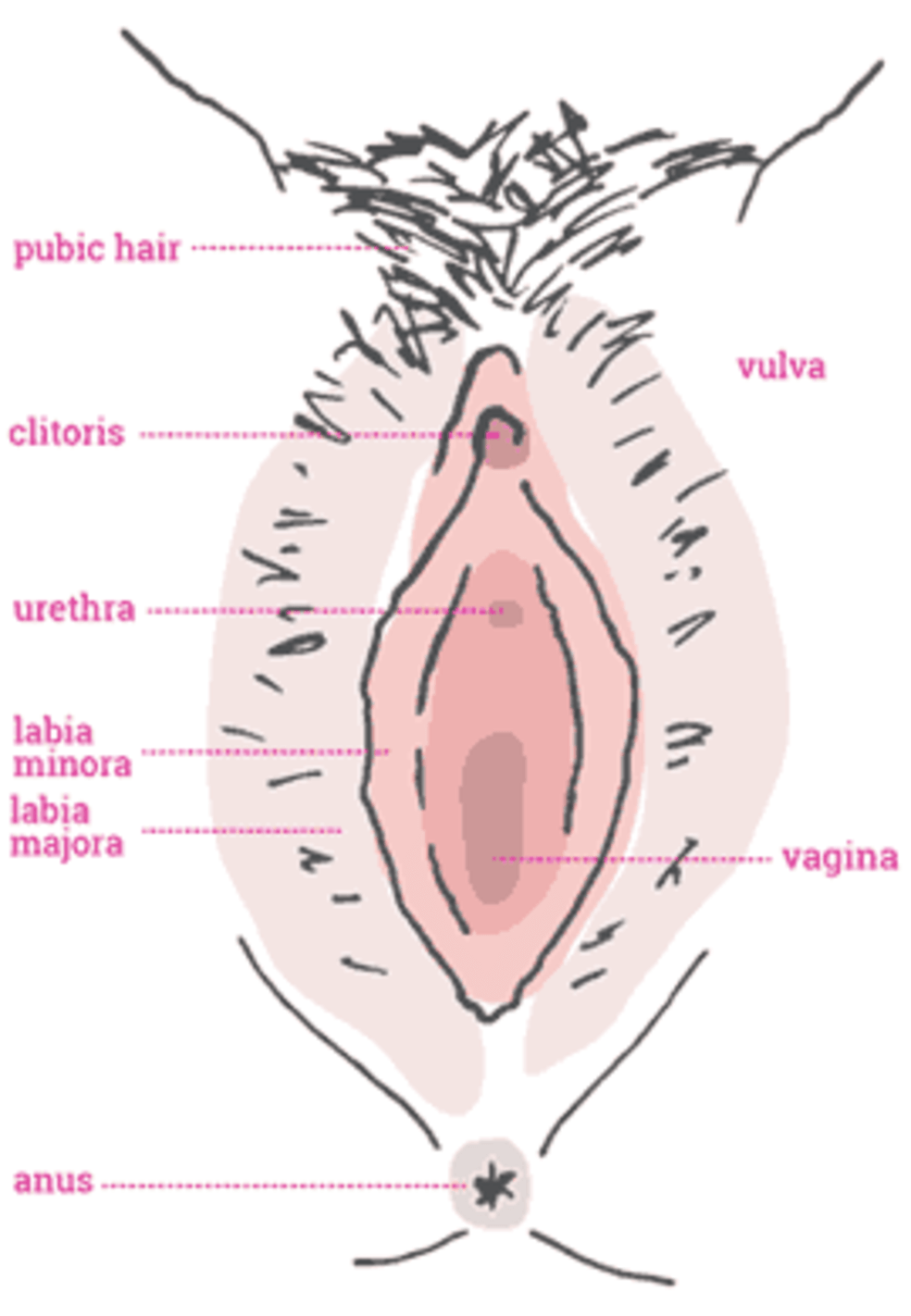 Sore clitoris labia