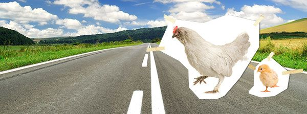 Why did the chicken cross the road jokes hemingway