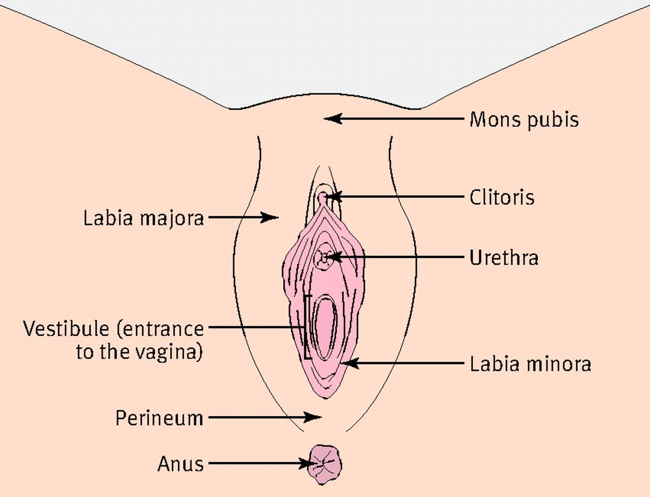 Sneak reccomend Sore clitoris labia