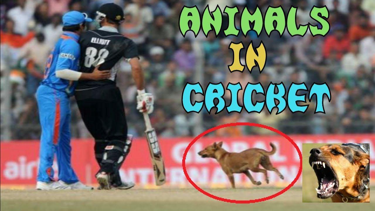 Zorro reccomend Funny cricket match reports