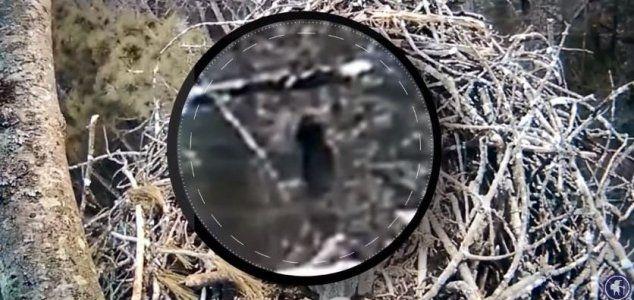 best of Webcam Live eagle nest